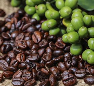 Какие страны выращивают и экспортируют кофе?