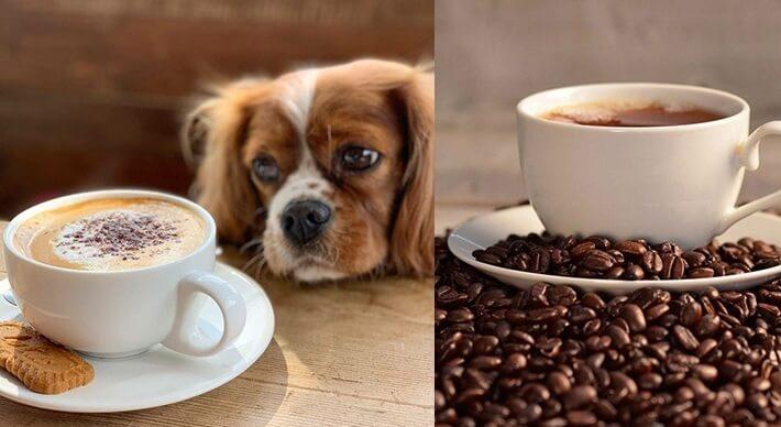 Собака и кофе